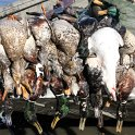 Green Timber Duck Hunting 2011-2012 Gallery -- img_0484.jpg
