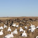 Green Timber Duck Hunting 2011-2012 Gallery -- img_2324.jpg