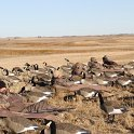 Green Timber Duck Hunting 2011-2012 Gallery -- img_2325.jpg