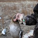 Green Timber Duck Hunting 2011-2012 Gallery -- img_2421.jpg