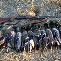 Green Timber Duck Hunting 2011-2012 Gallery -- img_2527.jpg