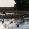 Green Timber Duck Hunting 2011-2012 Gallery -- img_2936.jpg