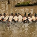 Green Timber Duck Hunting 2011-2012 Gallery -- img_3351.jpg