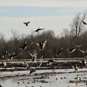 Green Timber Duck Hunting 2011-2012 Gallery -- img_3405.jpg