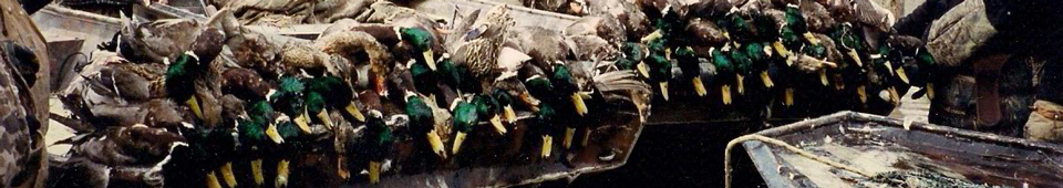Greent Timber Duck Hunting